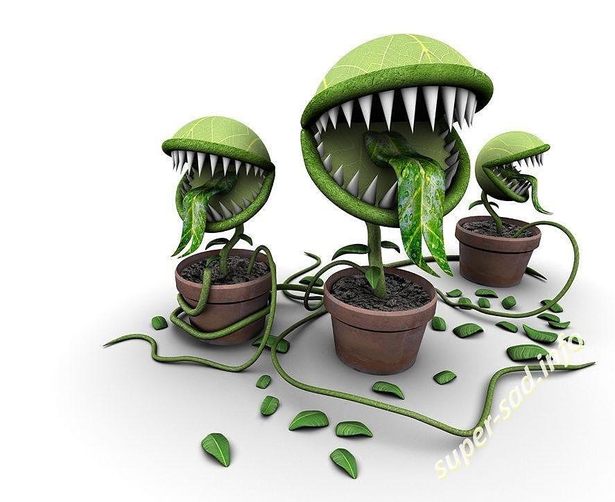 Ядовитые домашние любимцы мира флоры